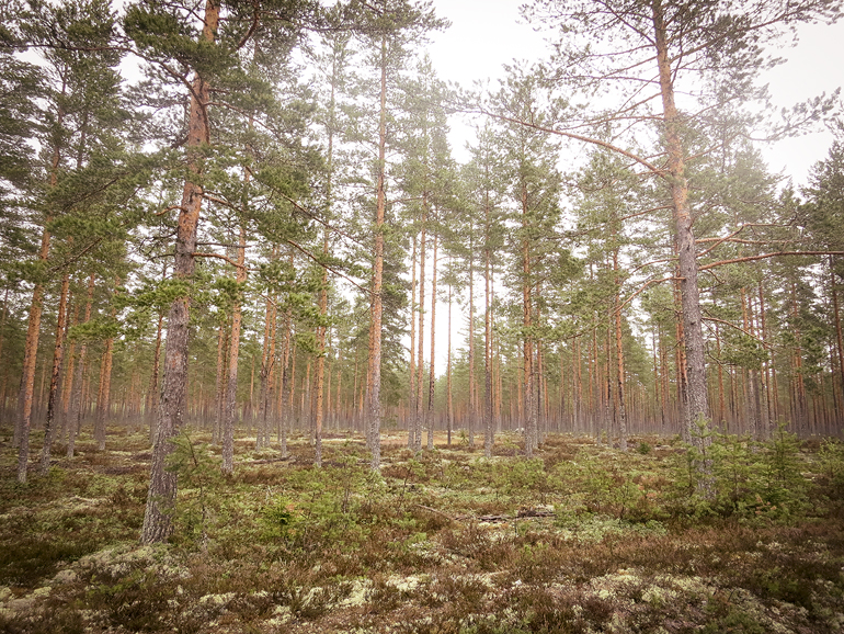 cykling tidernas väg skog