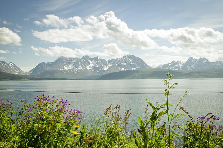 Tromsø 227 OLDERVIK