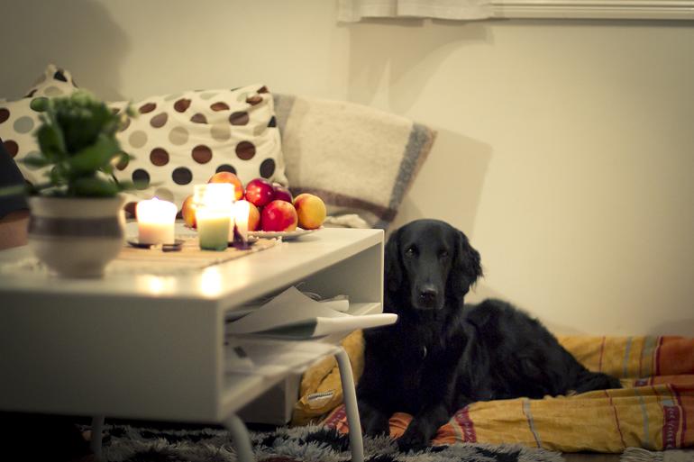 hemma i sälen 12 springhunden