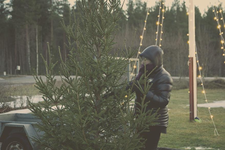 julgran hälsingland