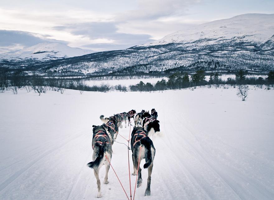 abisko dogsled träningsglädje traningsgladje.se