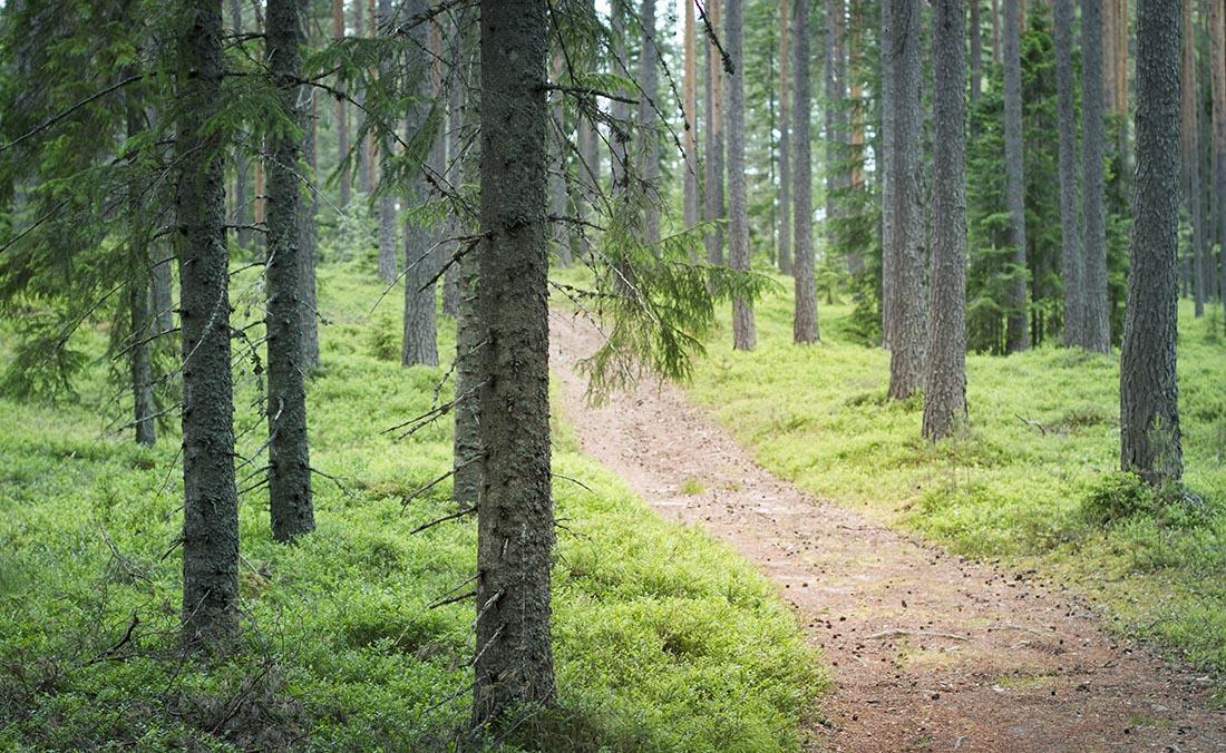 skog hälsingland