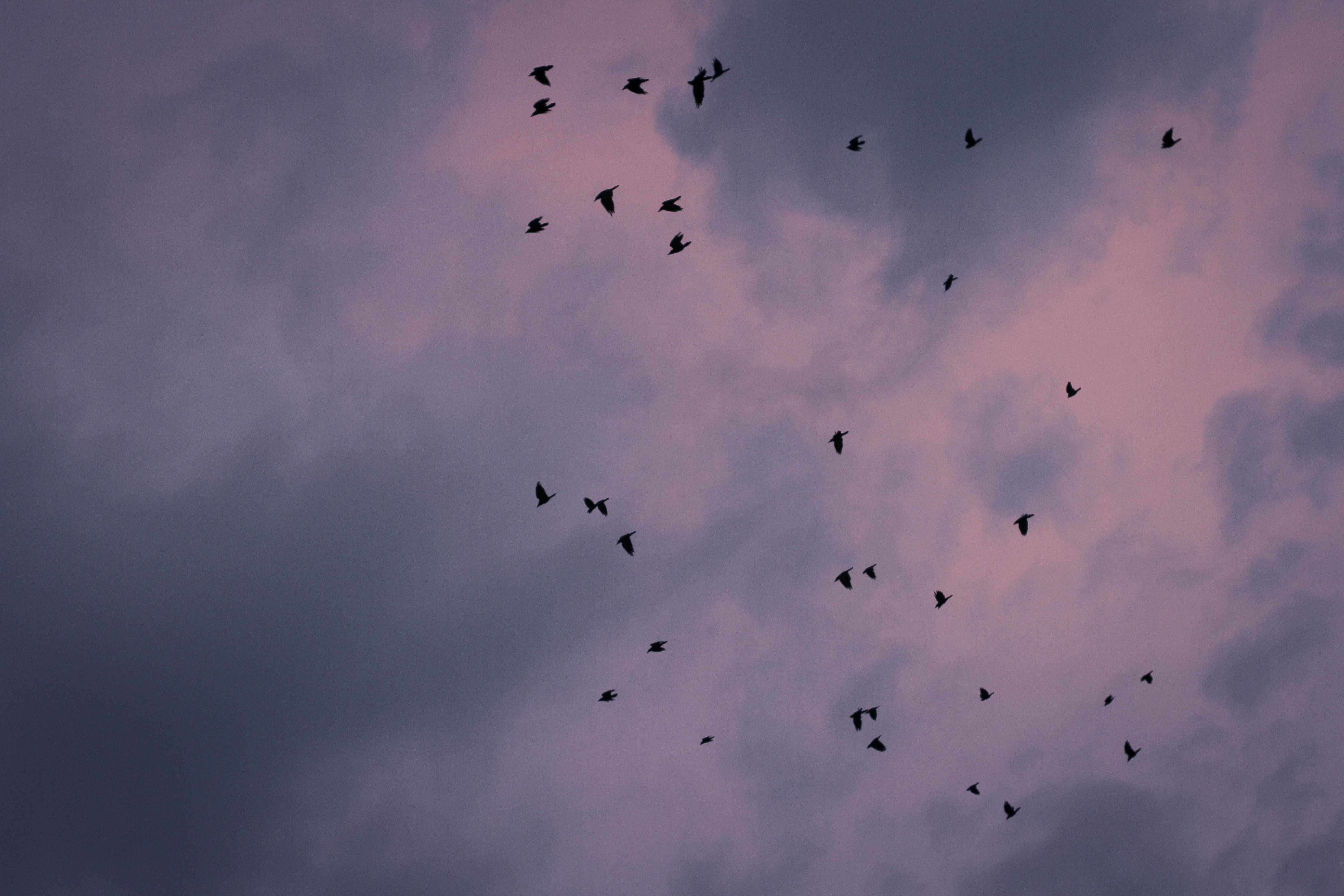 halmstad himmel fåglar