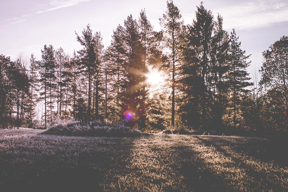 Hälsingland frost 02 IMG_7173