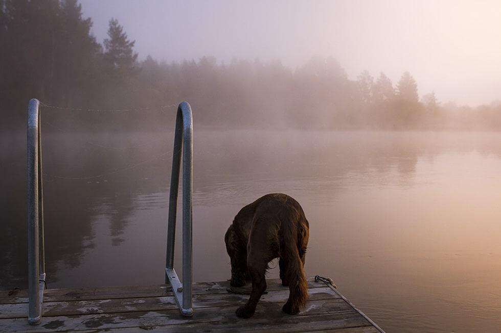 morgon dimma hälsingland hazel IMG_5525