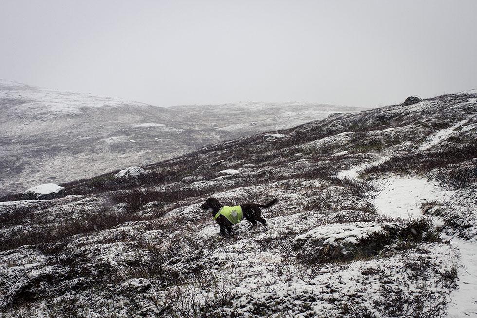 snö i åre ullådalen stendalen hazel IMG_9369