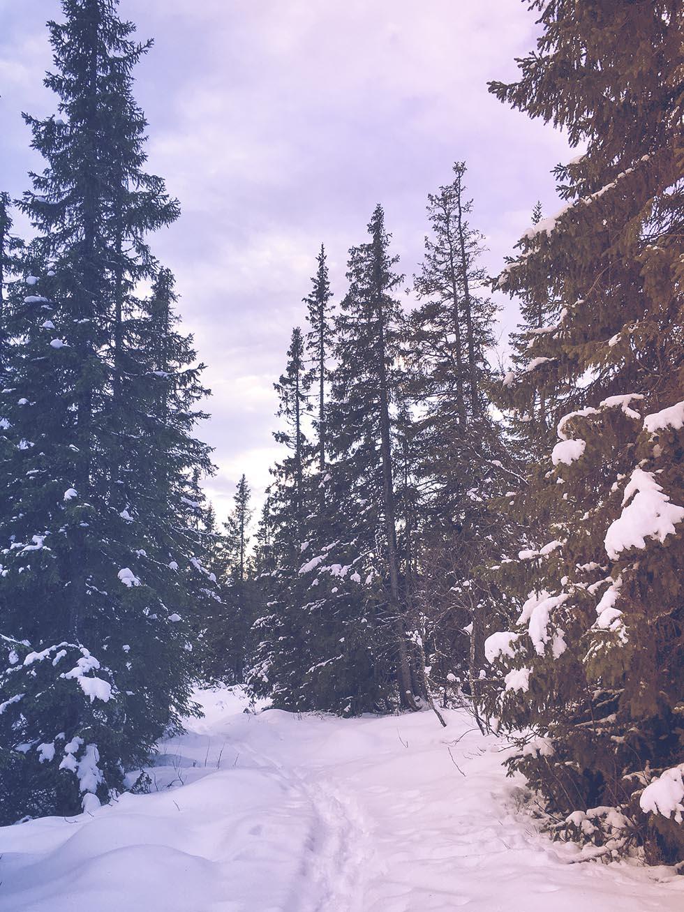 snöskor åre träningsglädje IMG_9749