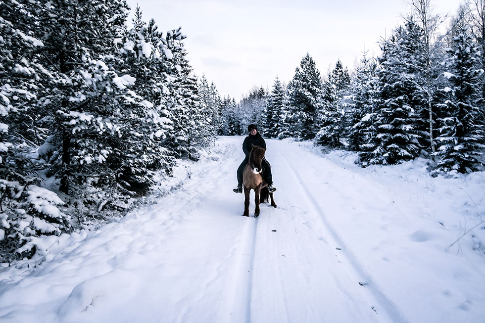 Snäcksjöns islandshästar Sara IMG_5134