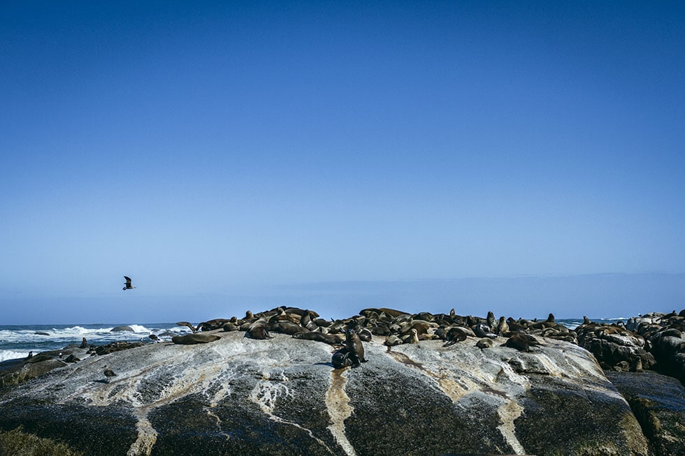 Cape town Hout Bay seal tour
