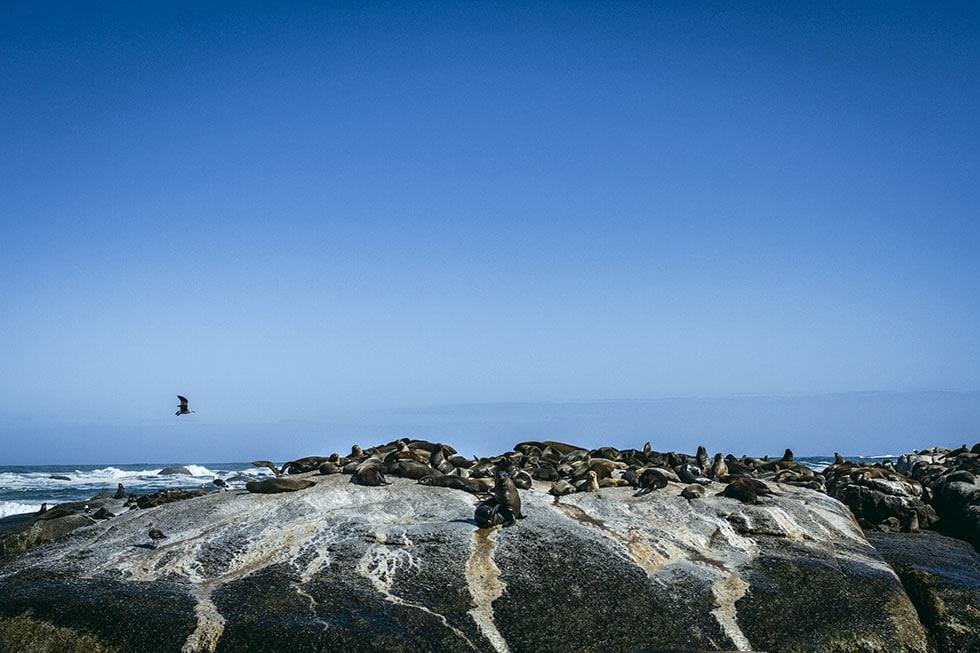 Cape town Hout Bay seal tour