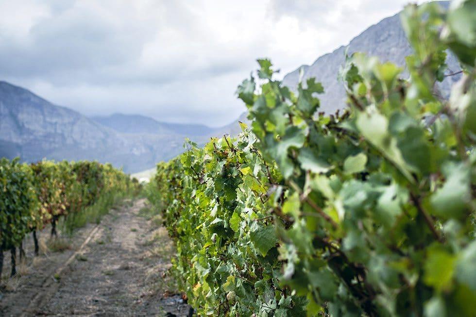 Franschhoek Grande Provence wine tasting