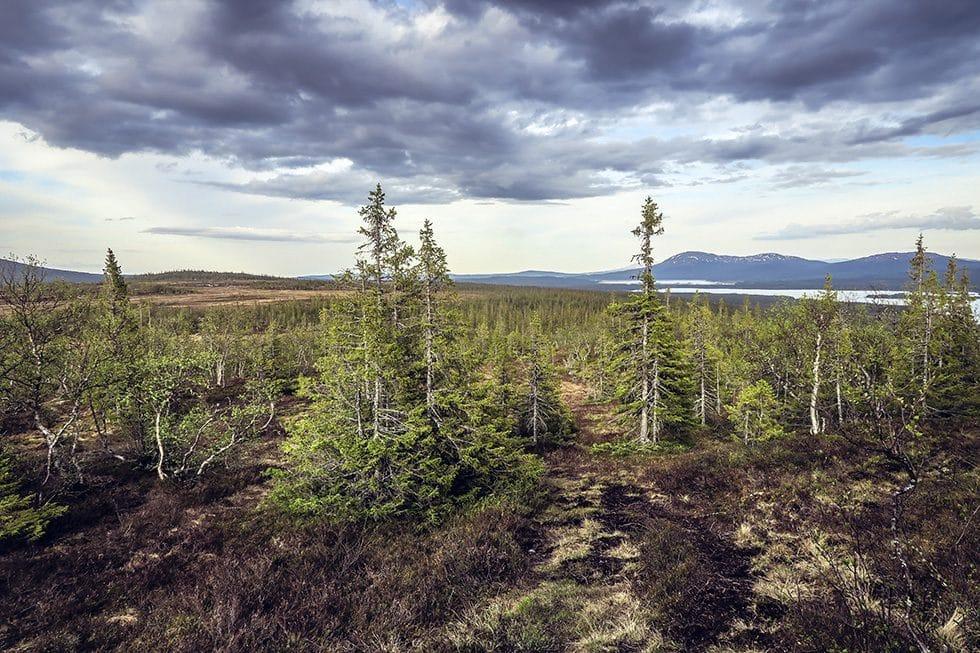Sommarens första stiglöpning på fjället – Kläpphögarna i Ottsjö