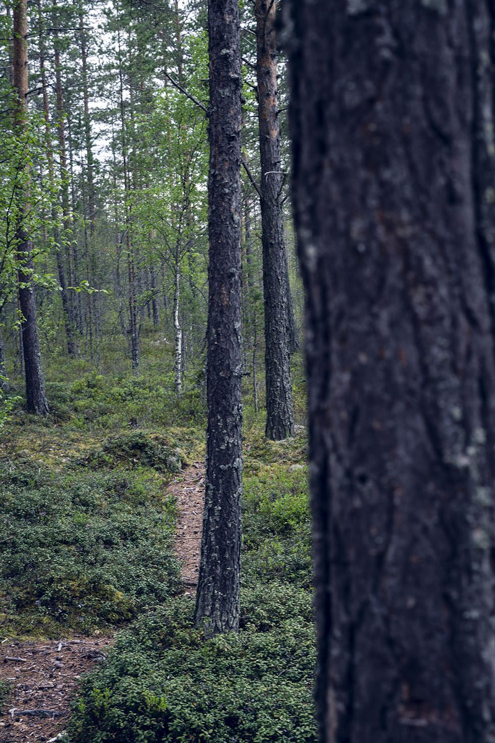 löpning skog IMG_8152