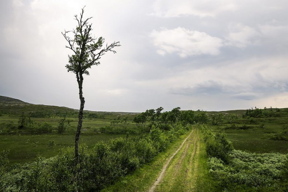 Karl Johans väg
