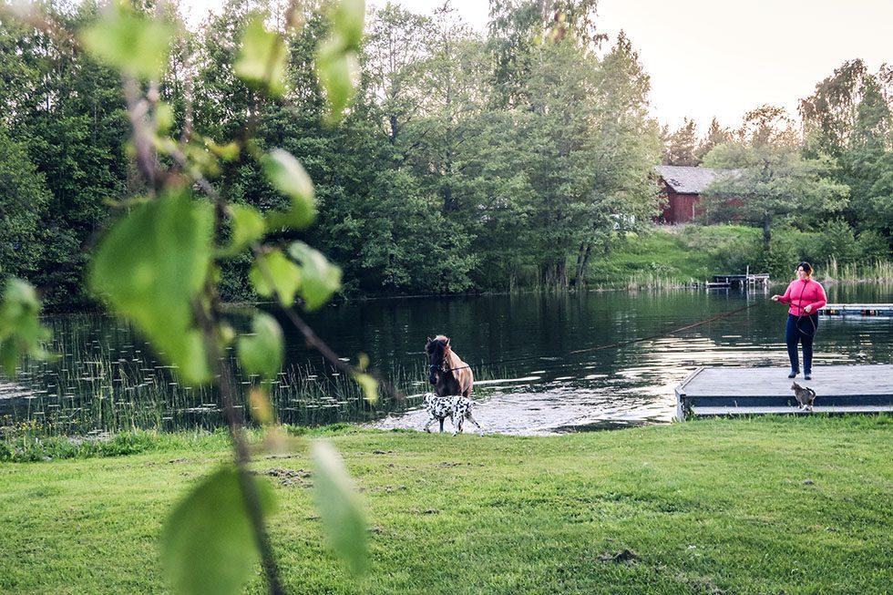 Snäcksjöns islandshästar Öregrund