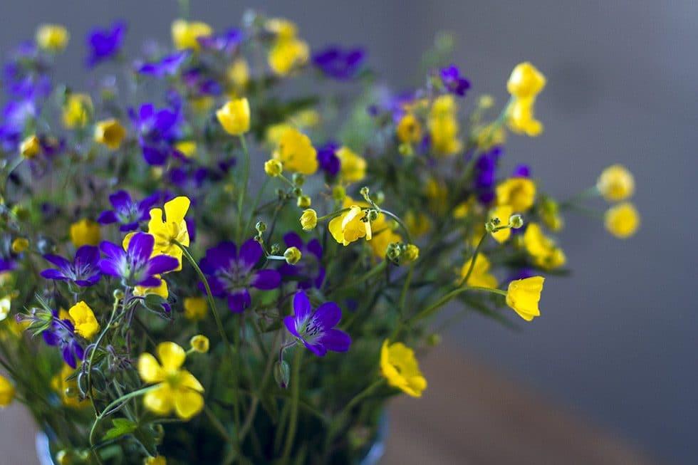 midsommar blommor IMG_9722