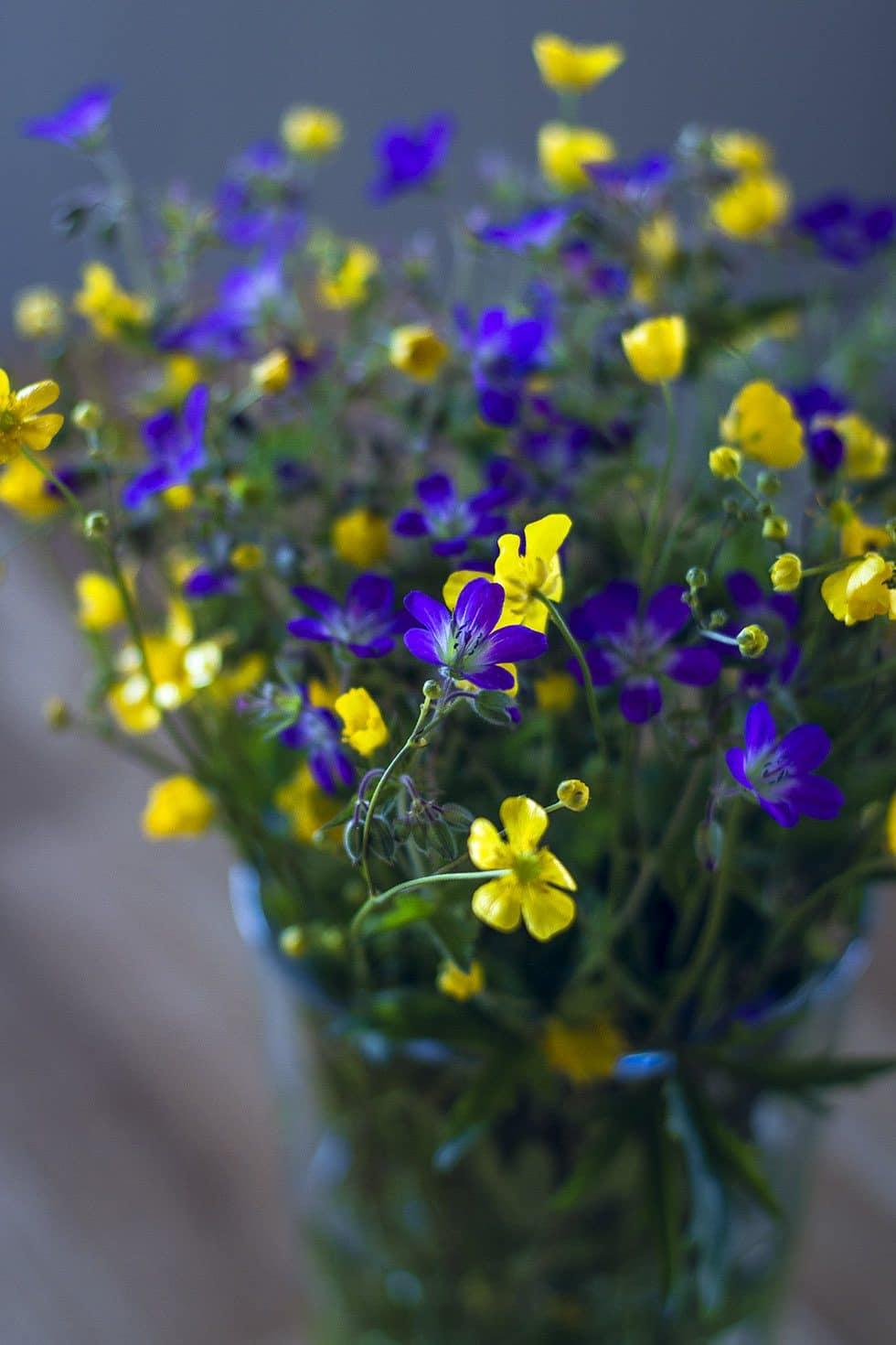 midsommar blommor IMG_9723