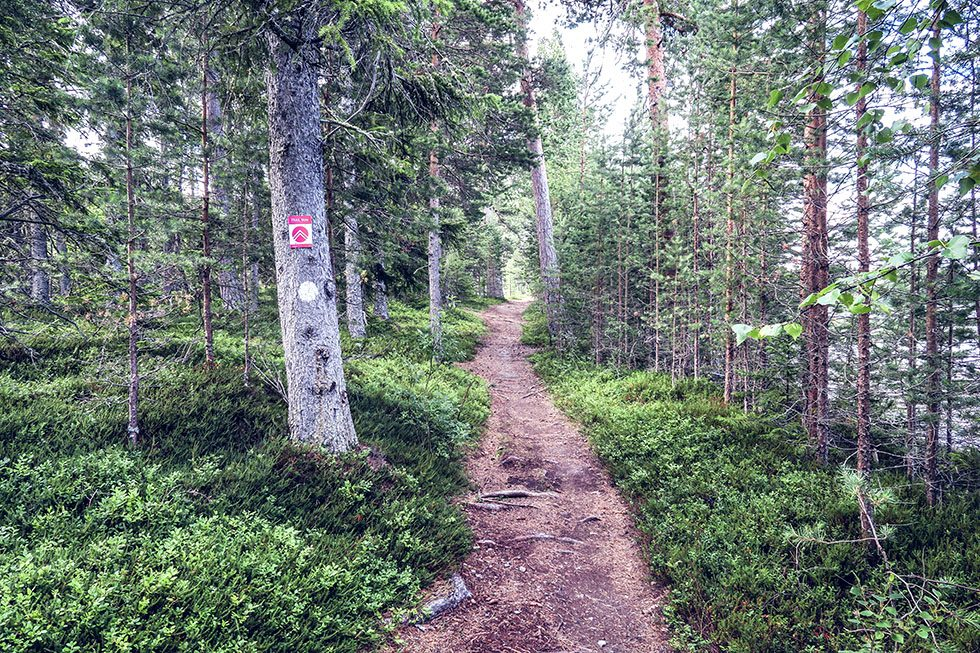Frösö park trail run