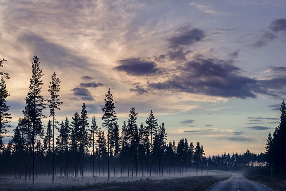 Hälsingland skog natt Los copy IMG_2339
