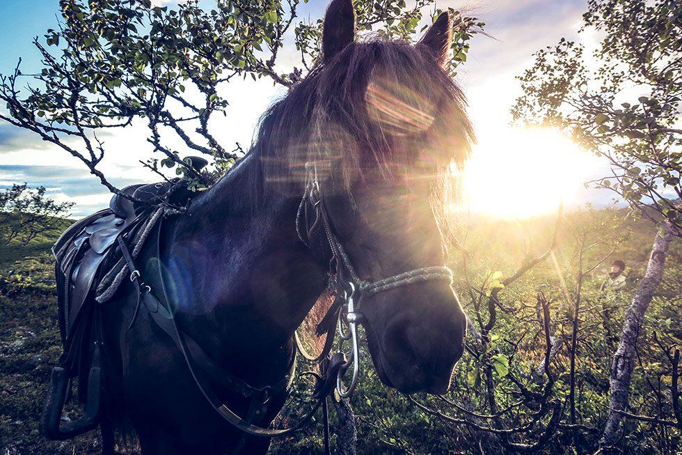 Trumvallen hästar