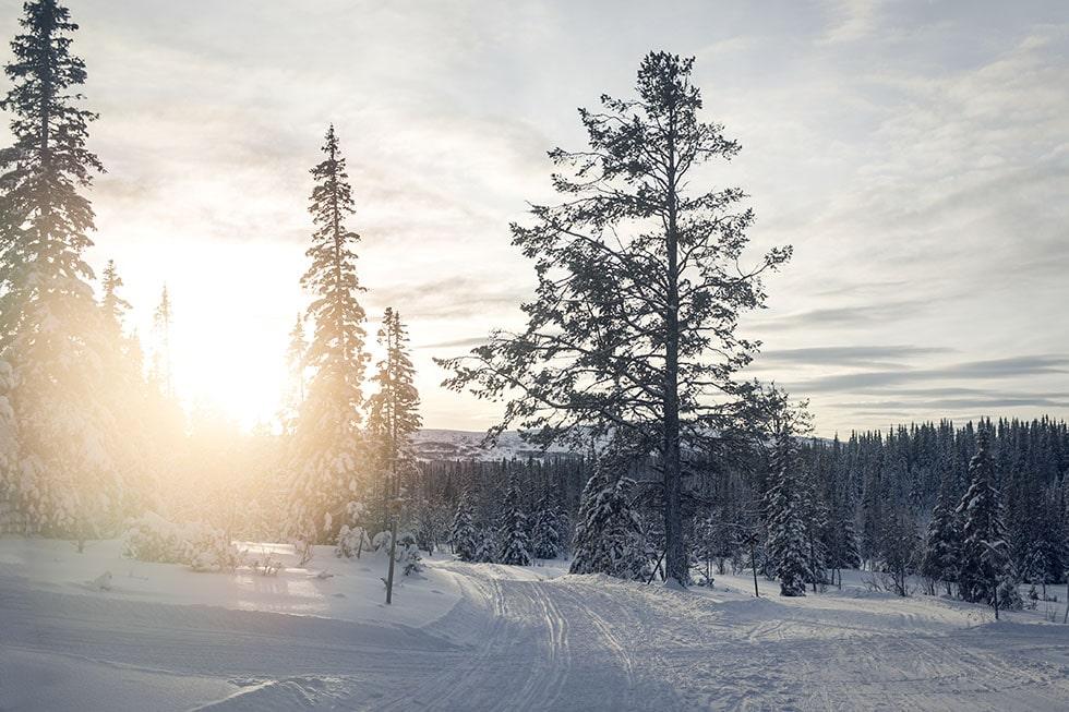 edsåsdalen_5M0A8752