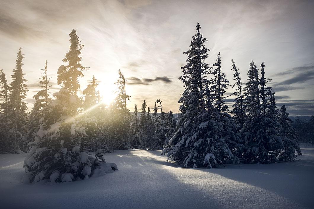 edsåsdalen_åre_vinter_5M0A8814
