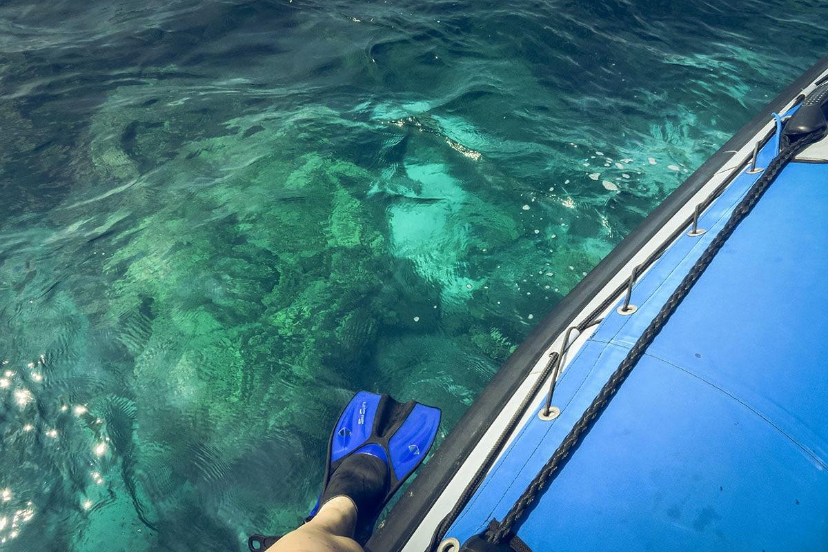 När vi simmade med vilda delfiner på Hawaii