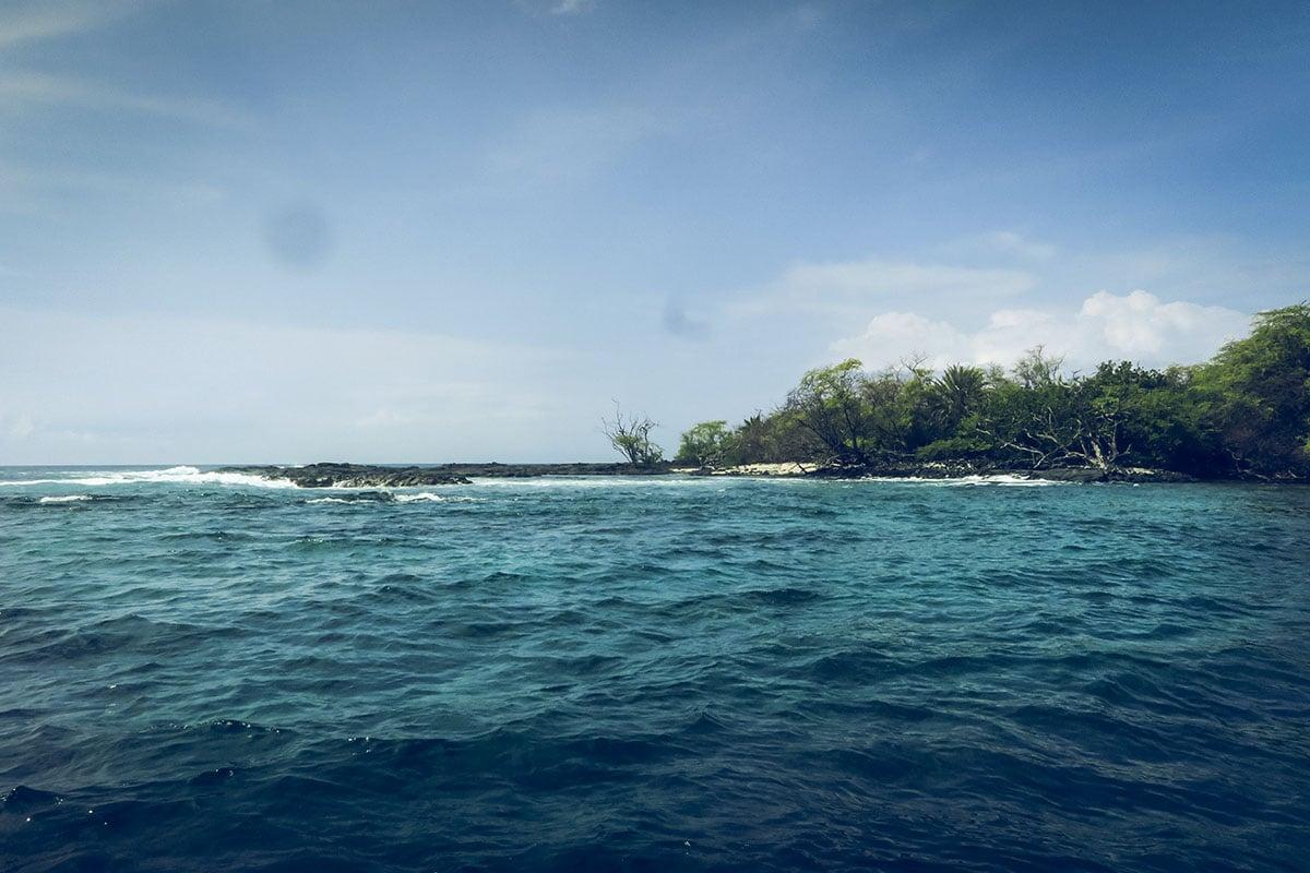 simma med delfiner Hawaii