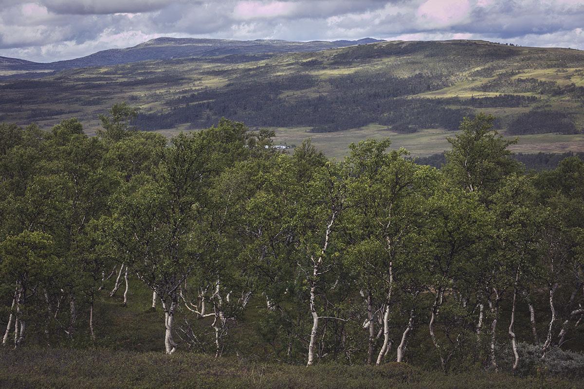 Rundhögen Blåhammaren