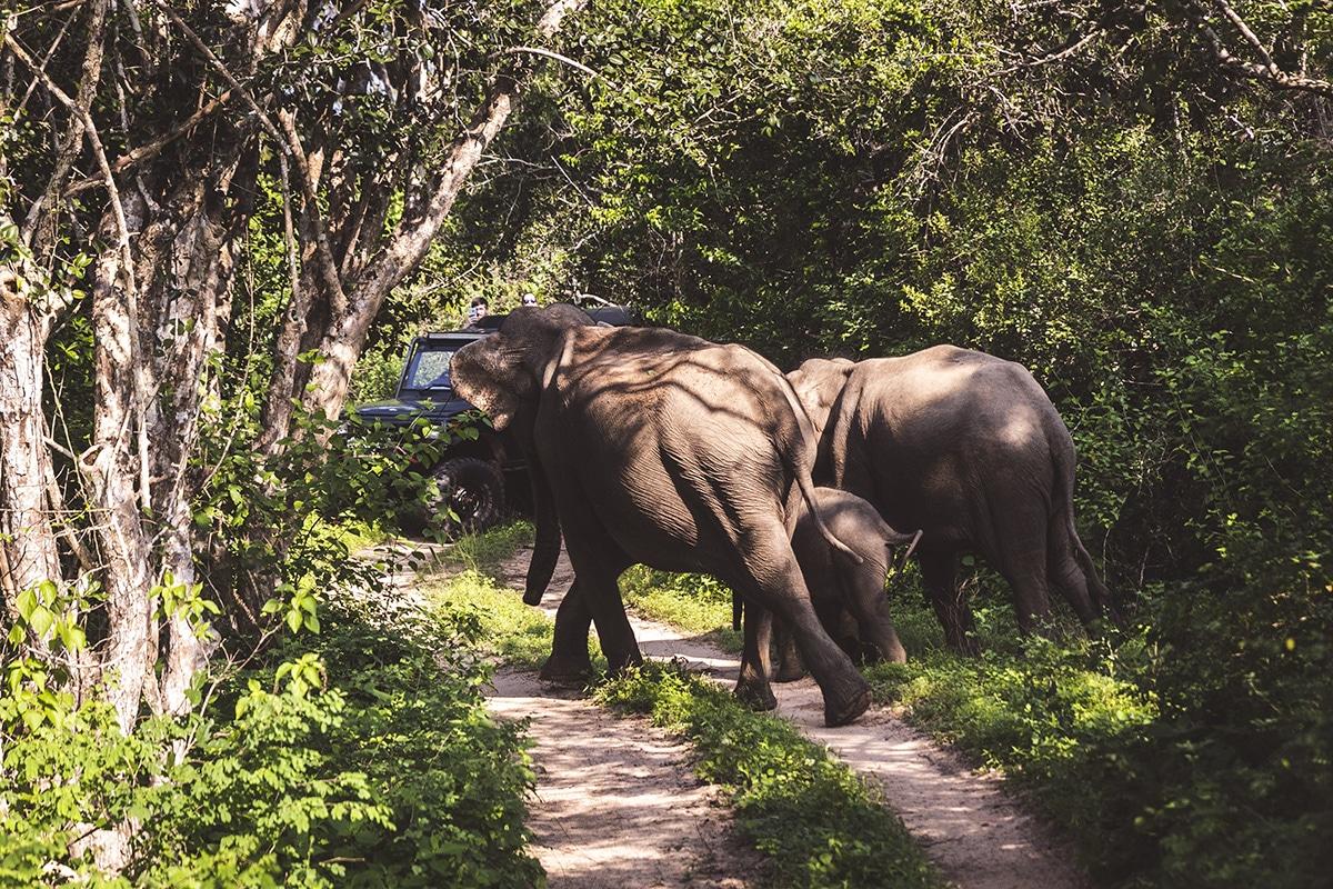 Safari i Yala