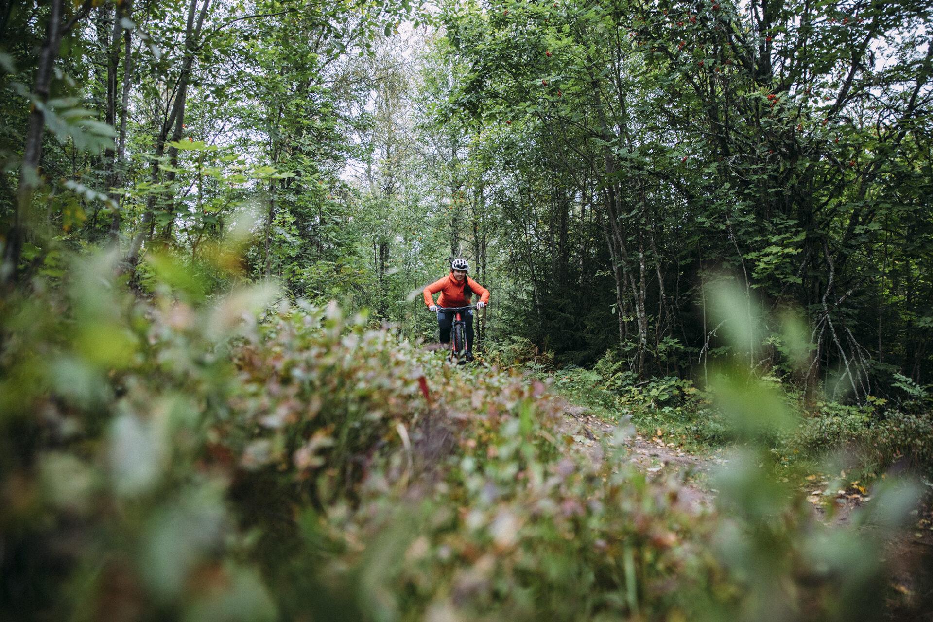mtb-cykling i säfsen i fin skog med grön mossa