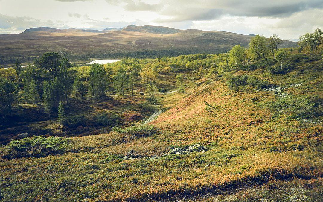 Hållbart – på alla sätt och vis