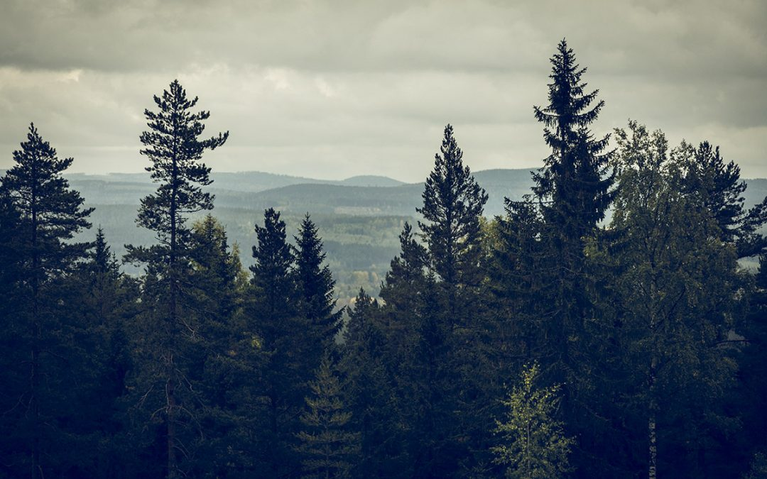 Om skog